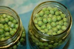 pickledpeas