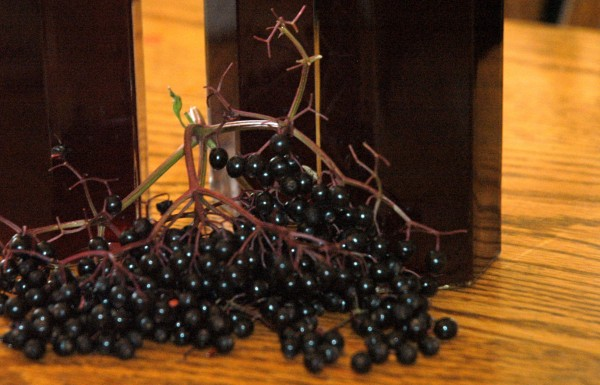 Elderberry Cordial and Syrup